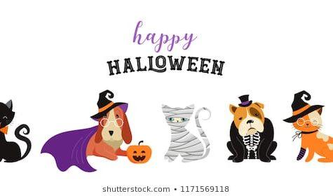 Halloween Pet Contest Contestants