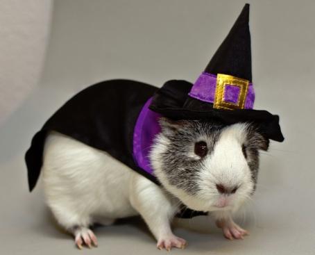West Branch Halloween Pet Contest