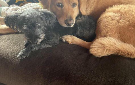 Cooper and Jax