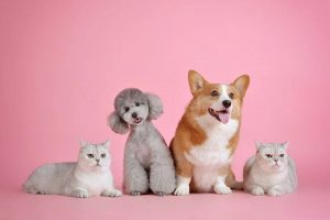 National Pet Week